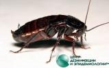 Все о вреде тараканов